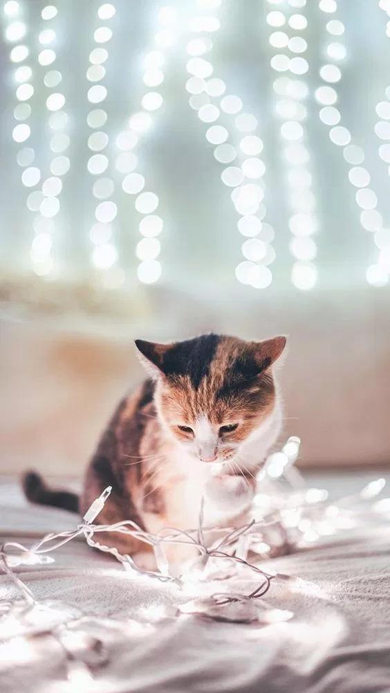خلفيات قطط كيوت 2019 صور قطط للبنات رائعة 2020 فوتوجرافر Cute Baby Cats Cats Baby Cats