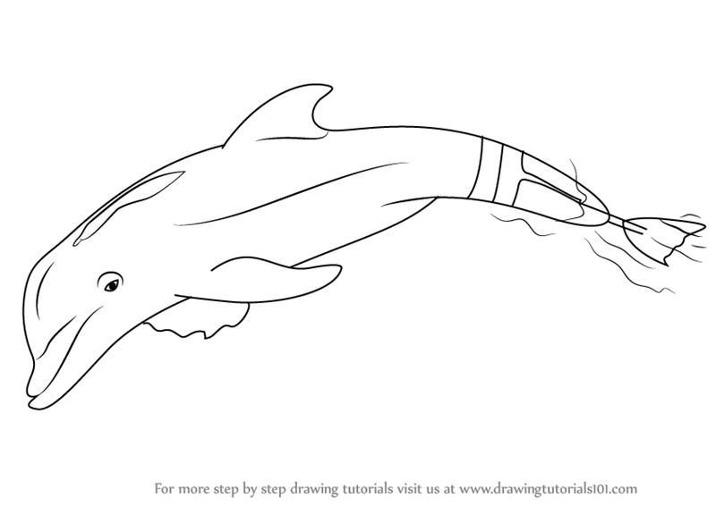 Learn How To Draw Winter The Dolphin Marine Mammals Step By Step Drawing Tutorials Dolphin Coloring Pages Horse Coloring Pages Dolphin Tale