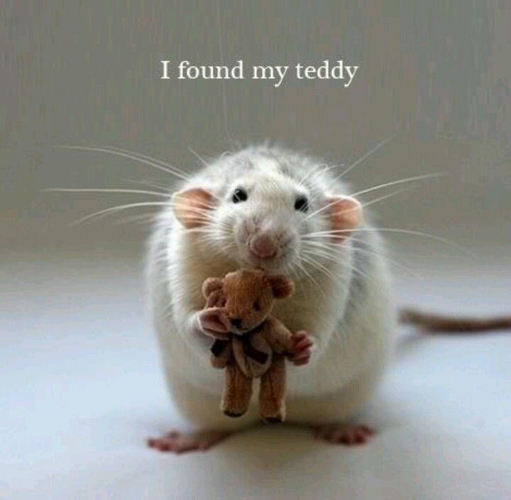 Pin by Heather La Varta on Animals! Baby animals funny