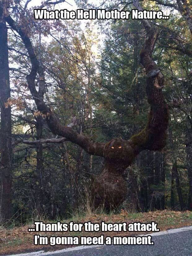 Not sure how many victims this tree has claimed.