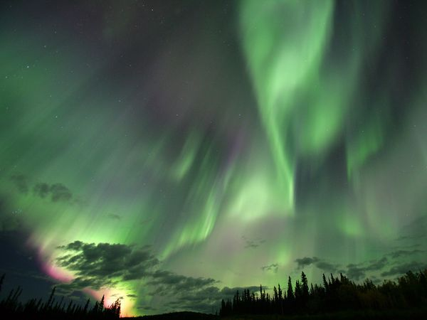 The northern lights give an otherworldly glow to the skies over a Canadian forest