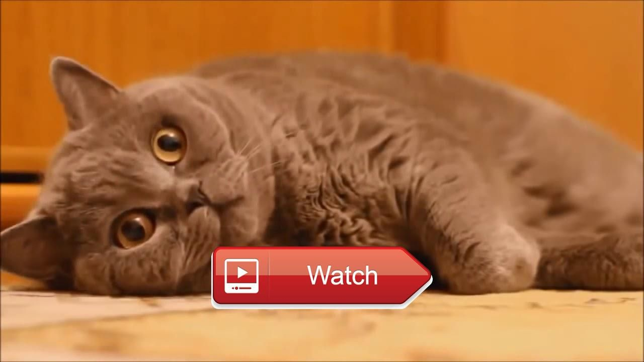 Funny Cats pilation Most See Funny Cat Videos Ever Part