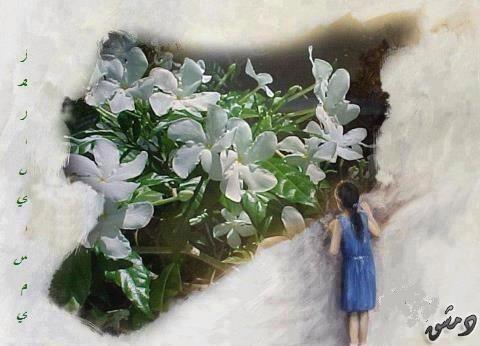 الياسمين الدمشقي له أظافر بيضاء تثقب جدران الذاكره
