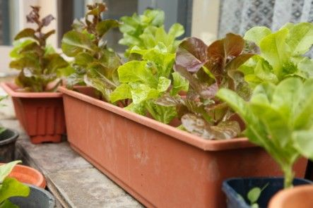 14 Plants You Can Grow In Your Apartment And Eat Page 10 Of