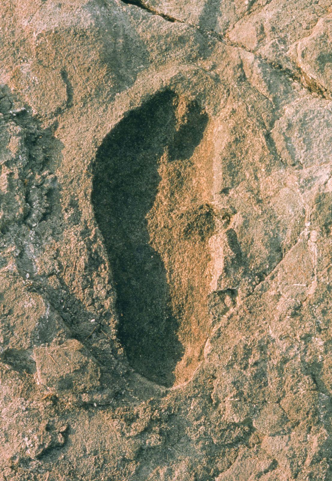 Laetoli tanzania footprints dating