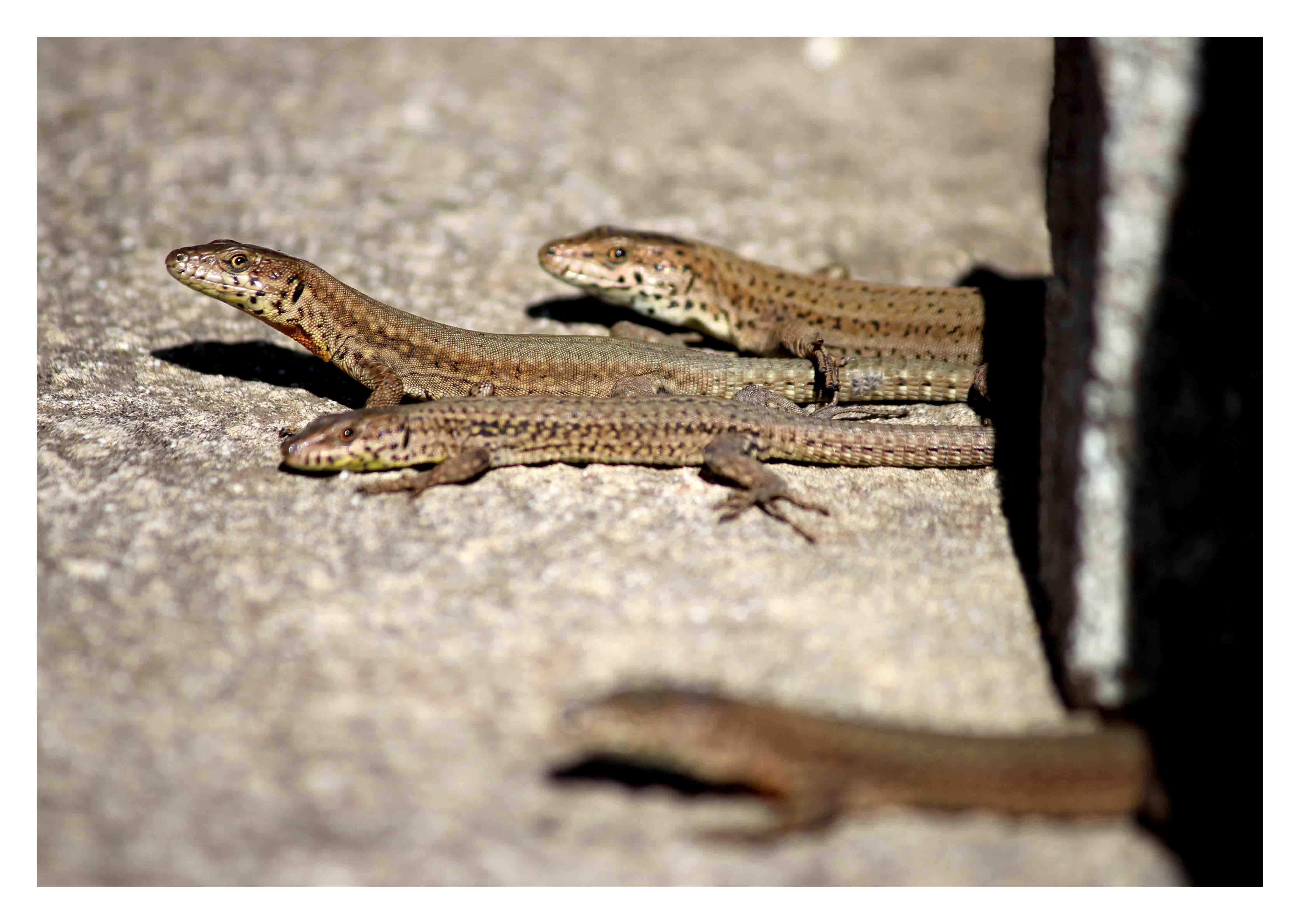 ON?  :))  ['Dos dragons de Komodo s'aparellen al Zoo de Barcelona' (http://www.youtube.com/watch?v=xxPjfSNqhxg)]