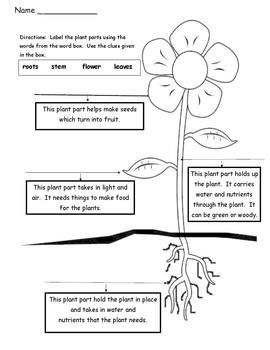 Plant Labeling Worksheet Free Parts Of A Plant Science