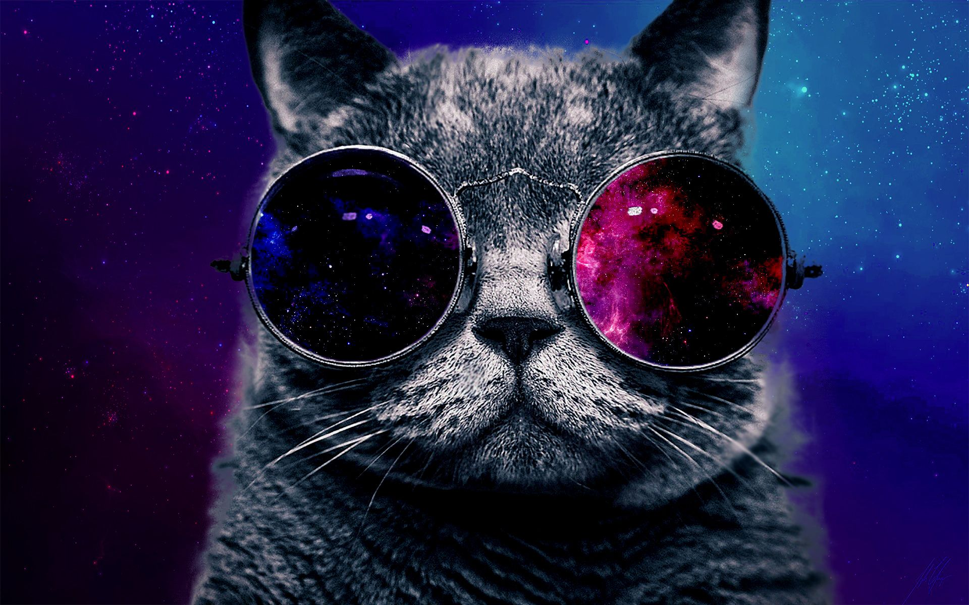 High Cat with Sunglasses Cat sunglasses, Hipster cat, Cats