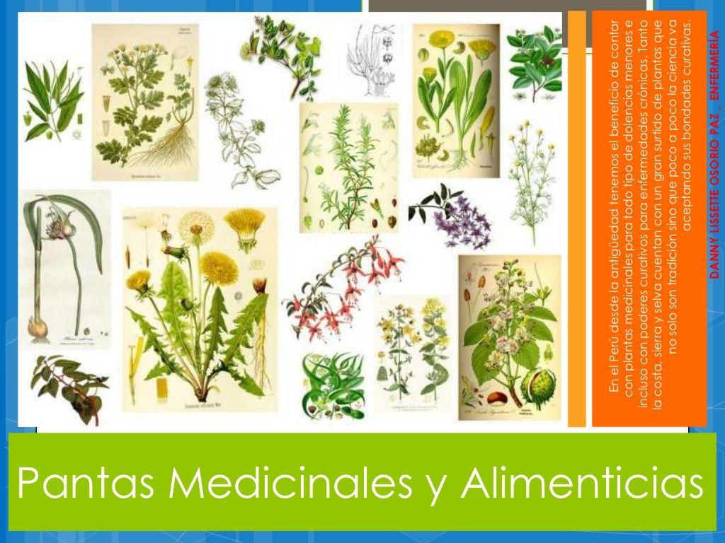 Plantas Medicinales Y Alimenticias Plantas Medicinales Plantas Alimenticio