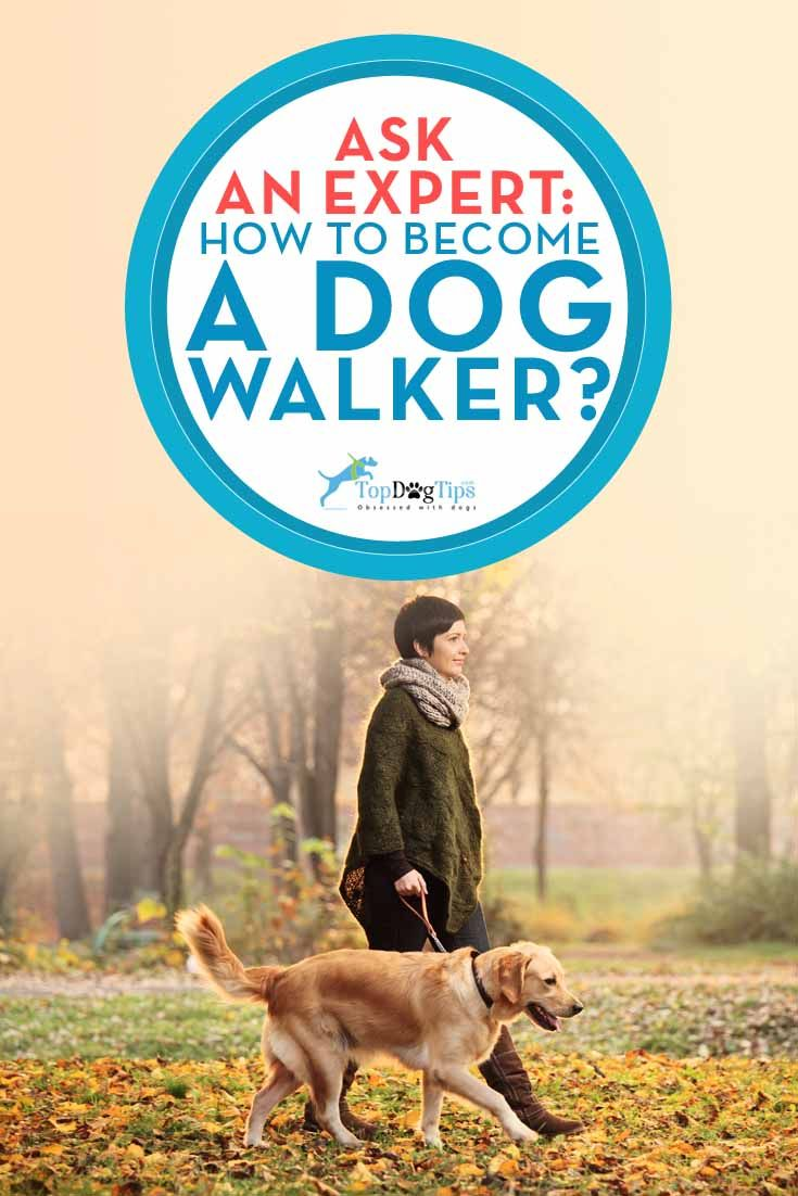 Ask the expert how to a dog walker dog walking