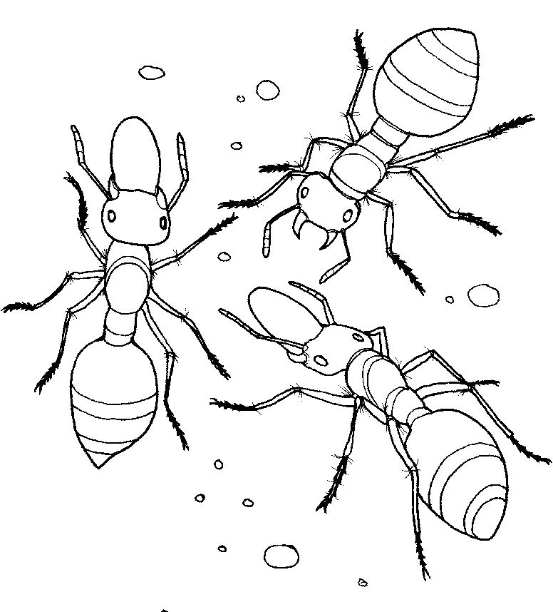 Printables Ant Coloring Pages