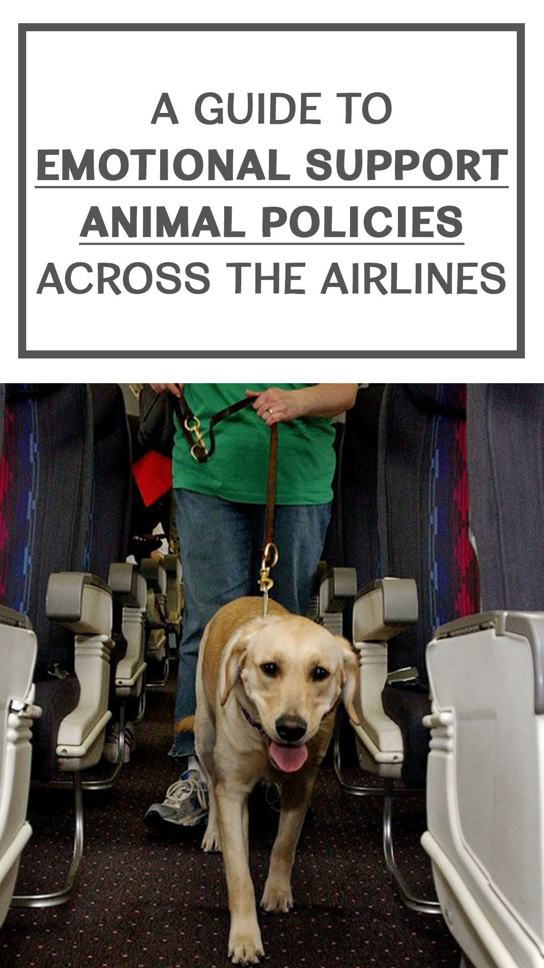 A complete guide to airline policy on emotional support
