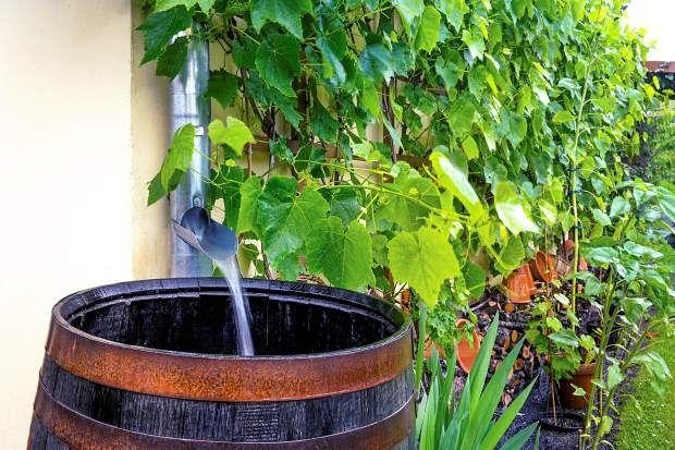 Tribune opinion: Arguments against rain barrels don't hold water | GreeleyTribune.com