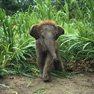 Baby elephants are so cute. :)