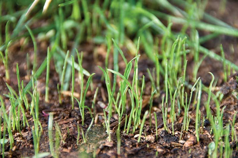 How To Get Grass Seed To Grow In Summer