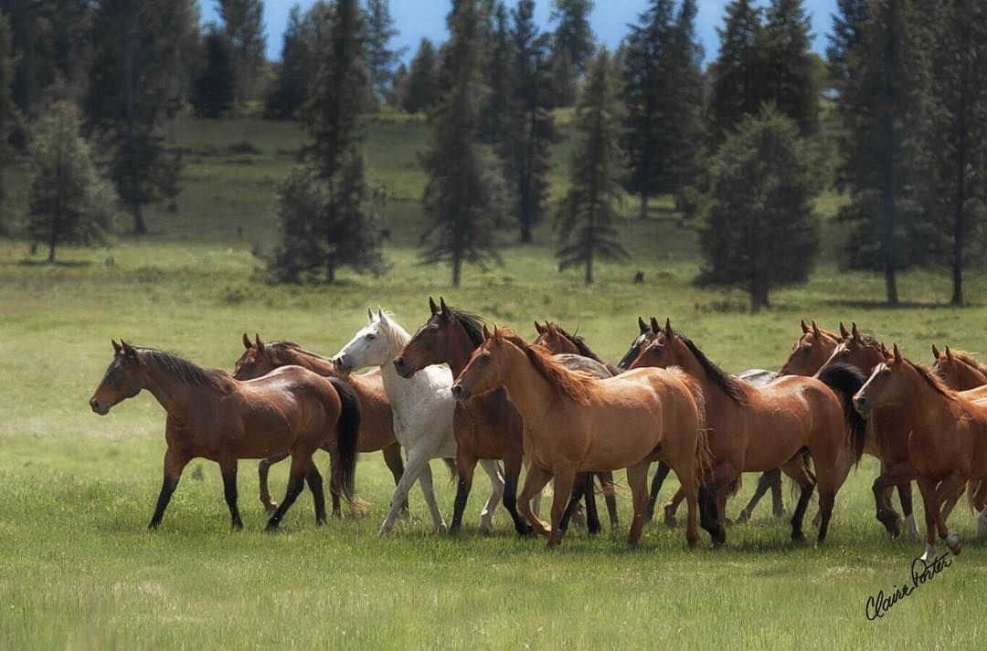 Pin by Nadine Privratsky on Horses (With images) Equine