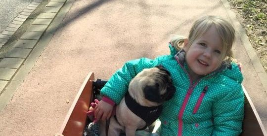 Cute child with PUG in carrier cycle.
