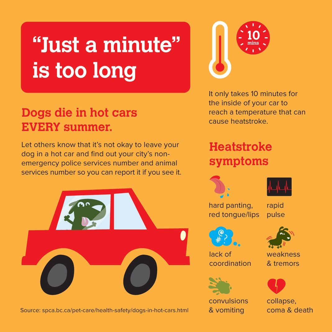 Don T Leave Your Dog In A Hot Car Not Even For A Minute In 2020 Dog Skin Care Dog Wellness Hot Cars