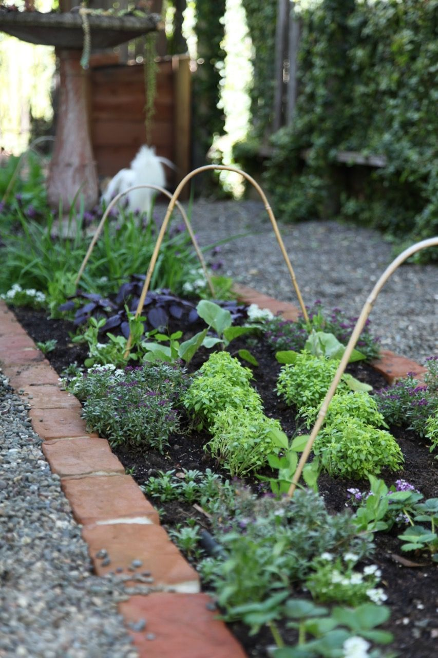 A petfriendly kitchen garden with the home depot dog