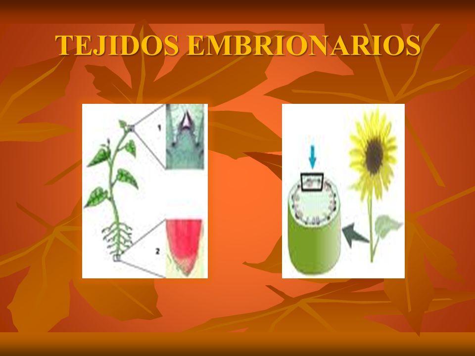 cuales son los cuatro tipos de tejidos vegetales