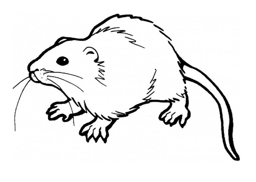 rats coloring pages Free Printable Rat Coloring Pages For Kids | coloring pages  rats coloring pages