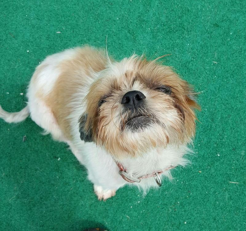 Pets for adoption in wisconsin