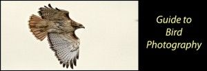 Guide to Bird Photography