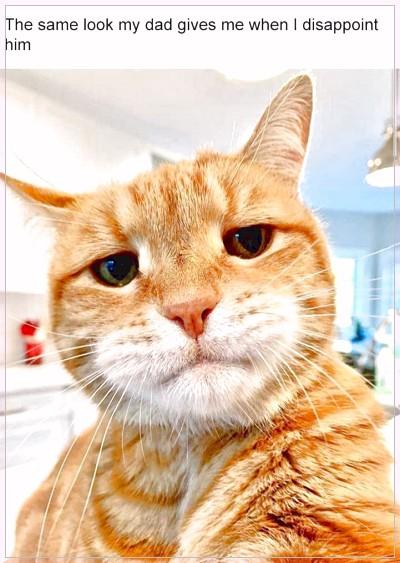 Gambar Kucing Lucu Gambar Kucing Lucu Kucing Kucing Lucu