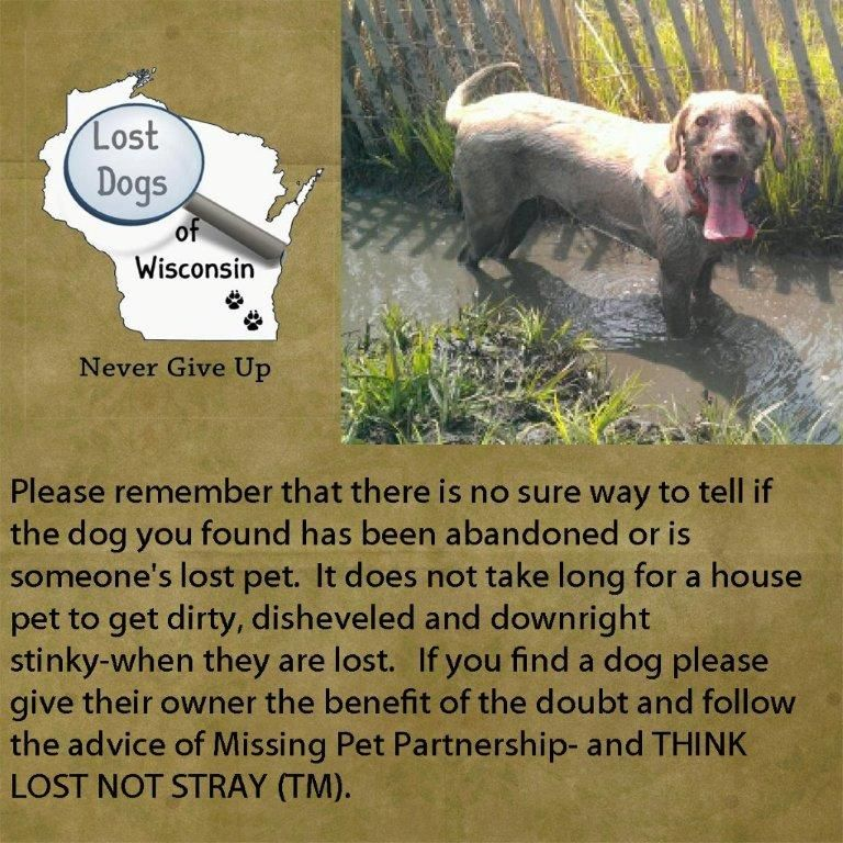 Pin By Lost Dogs Of Wisconsin On Tips To Find Your Dog Losing A Dog Dogs Losing A Pet