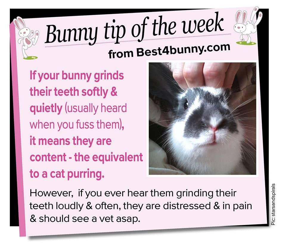 Bunny Trivia 9 Amazing Facts About Pet Rabbits: Tooth Grinding // I Can Feel The