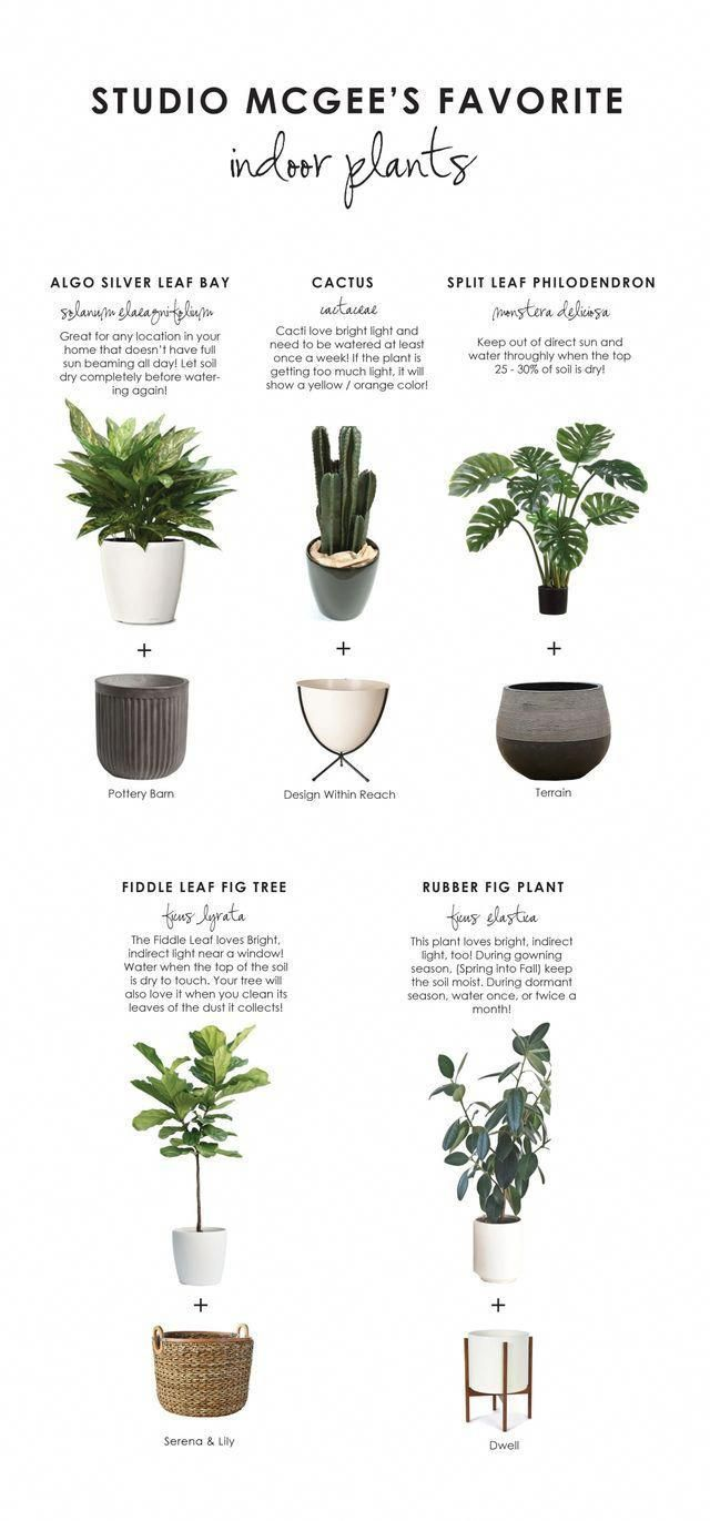 Names Of Indoor Plants Modern House - Modern House
