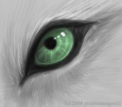 fotos de olhos de lobos - Pesquisa Google