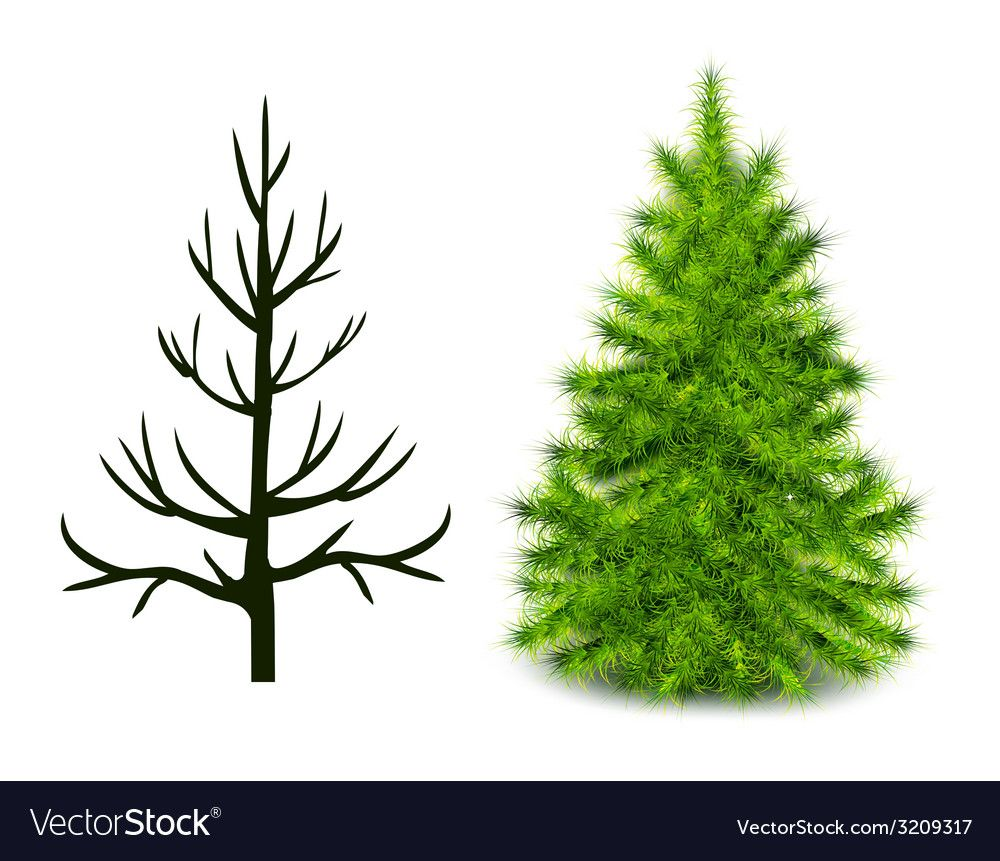 Trees Trunk And Branched Green Christmas Tree Vector Image On Vectorstock Green Christmas Tree Christmas Tree Christmas