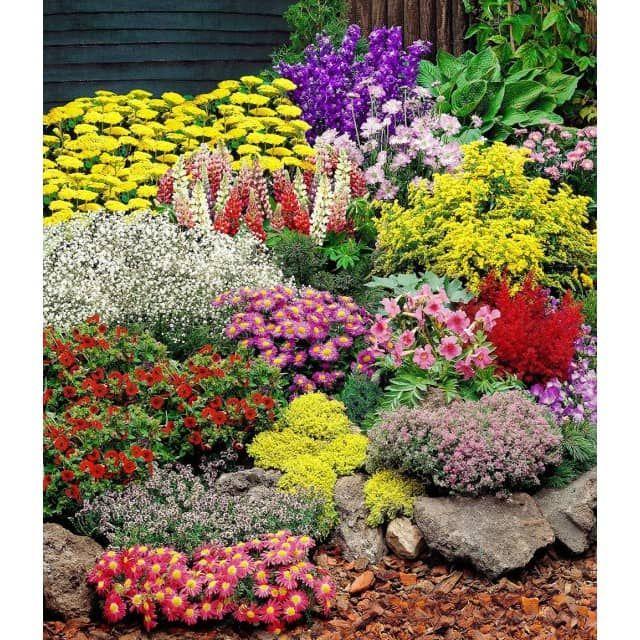 Grosser Staudengarten 14 Pflanzen Garden Inspiration Plants Flowers Perennials