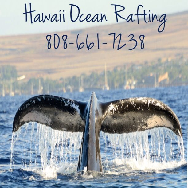 Best way to see the humpbacks, if on Maui.