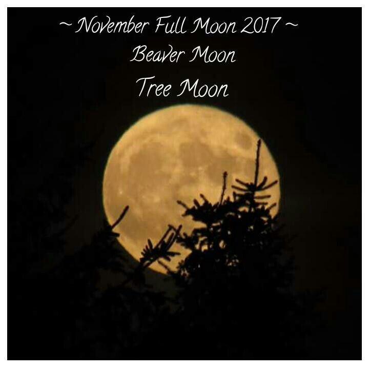 ~ November Full Moon 2017 ~ Beaver full moon ~ Tree full moon ~ full moon photos ~ #PhotoTakenByRosemary #CapturedIt