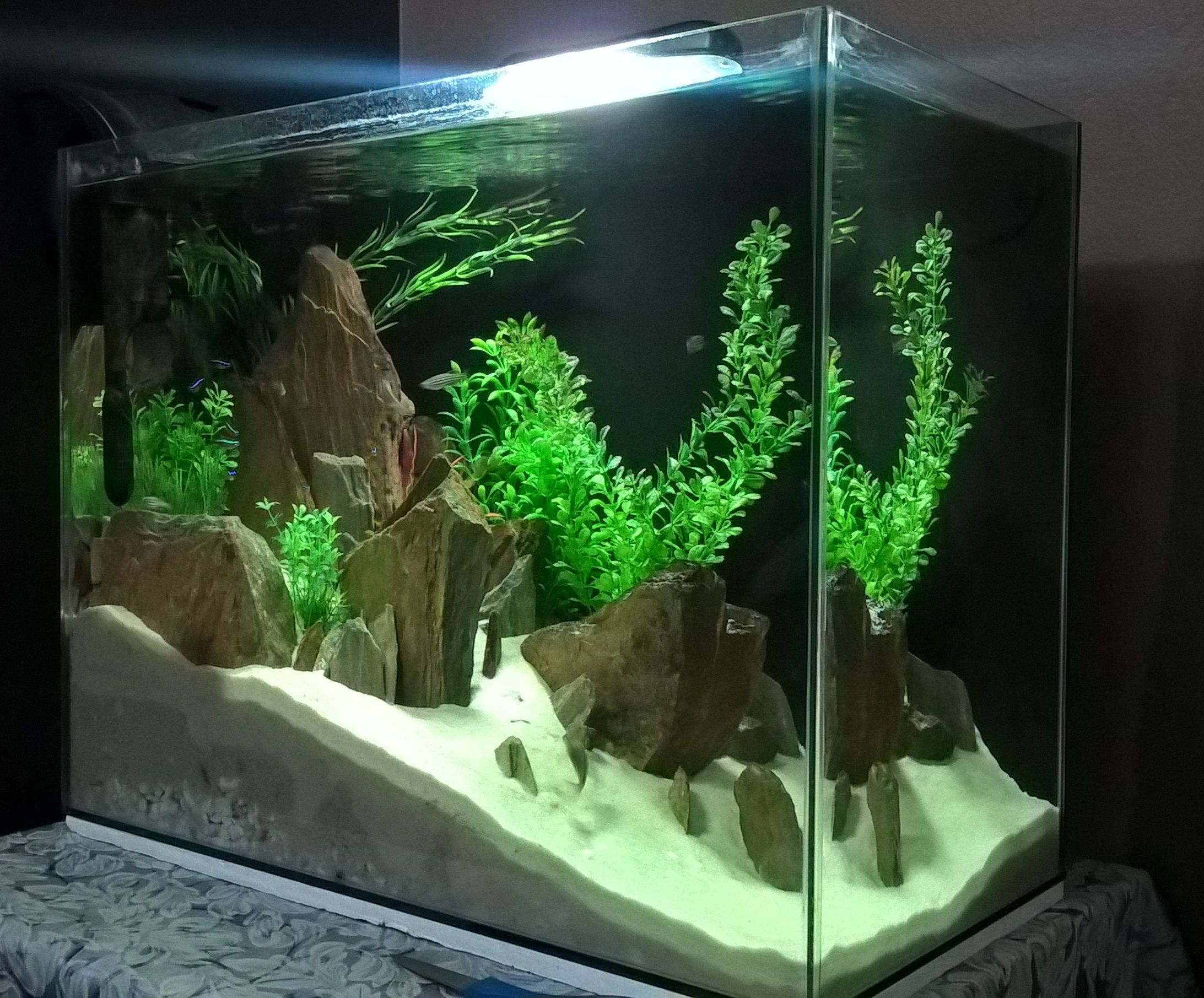 Frais De Plante Pour Aquarium Concept