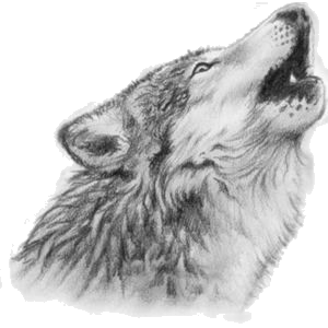 Grandfatherbuffalo2222 Gif Photo By Wolvesarewonderful Wolf Images Picture Tattoos Wolf Drawing Tattoo