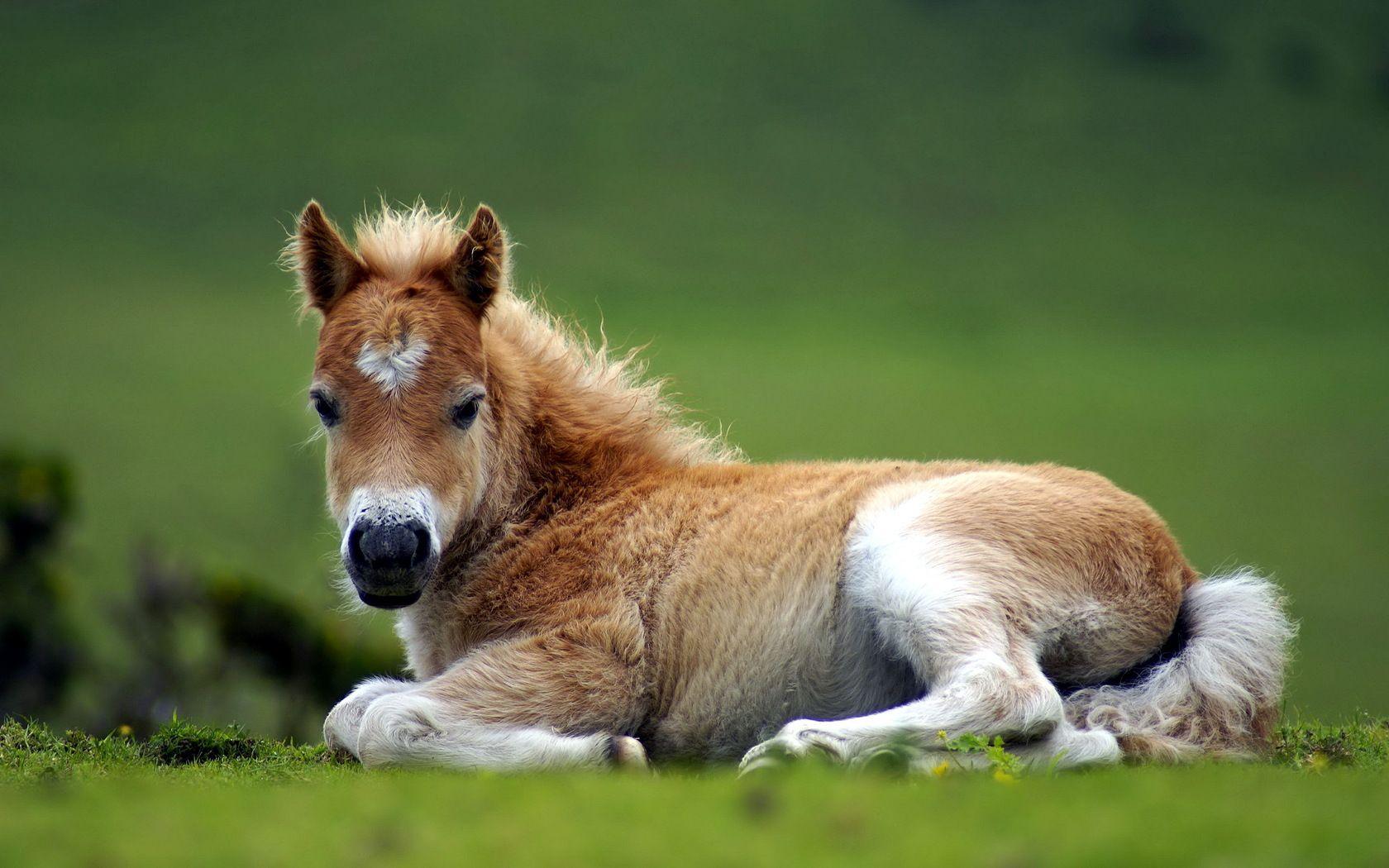 Beatiful Baby Horse