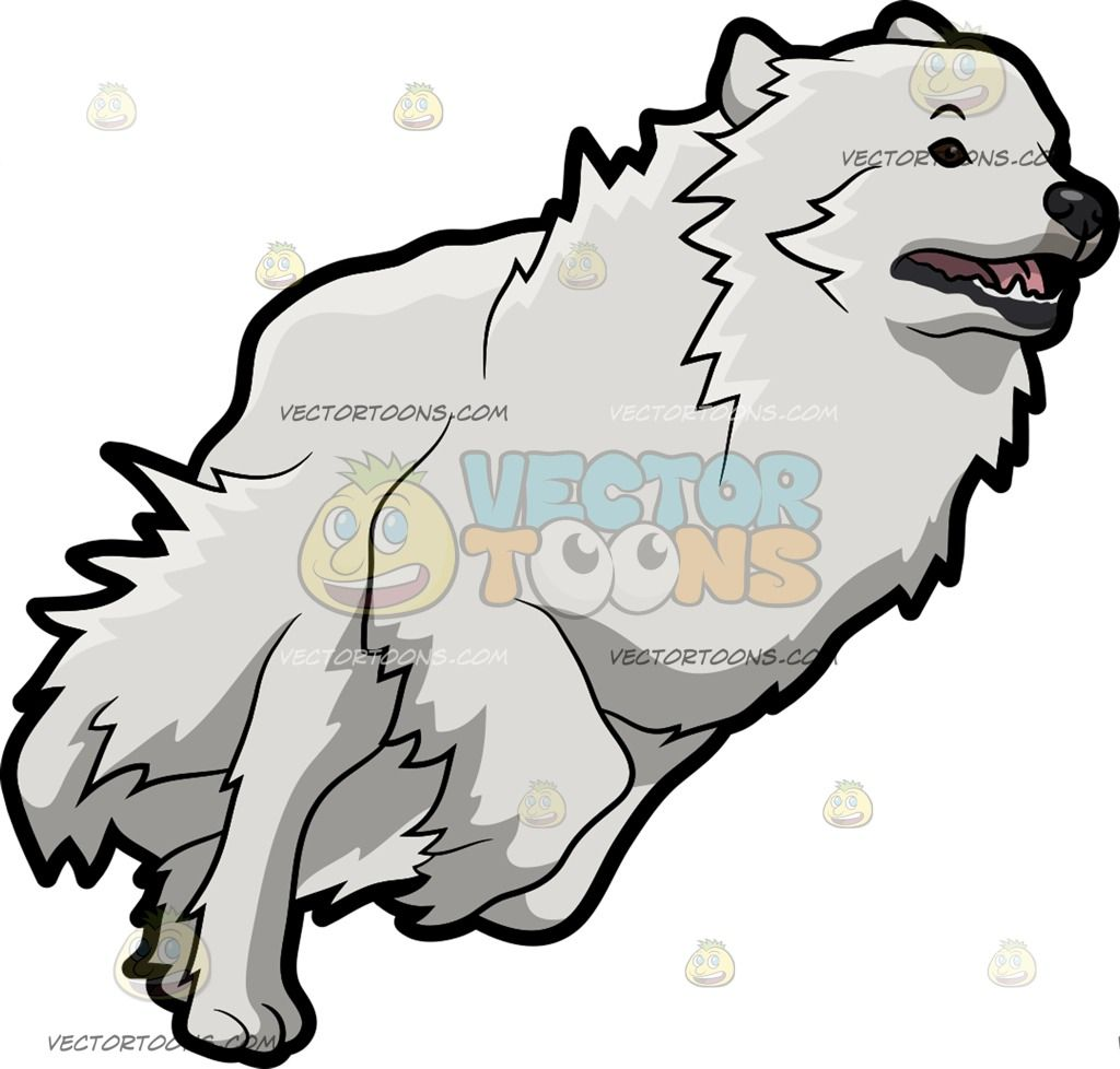 A Running Great Pyrenees Dog Great Pyrenees Dog