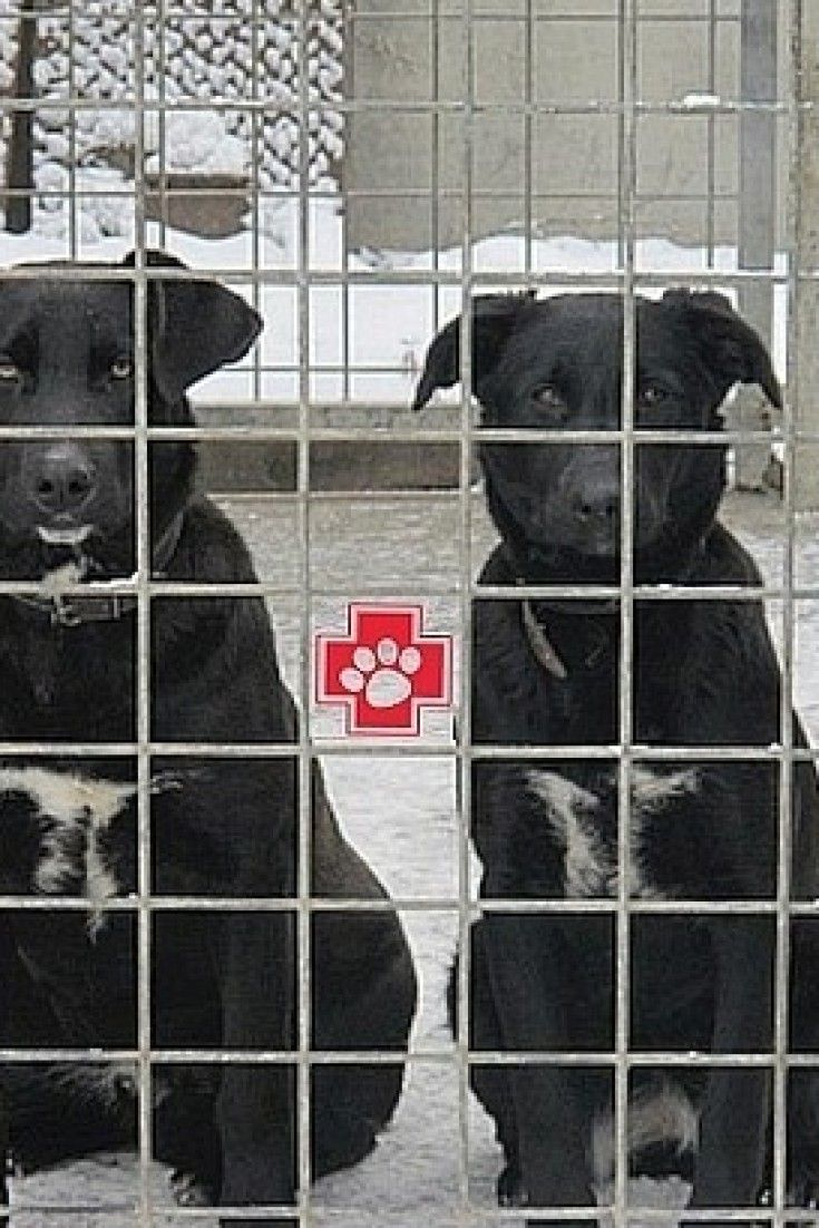 Nrw Stadte Rusten Gegen Ehrenamtlichen Tierschutz Tierschutz Tiere Und Nrw