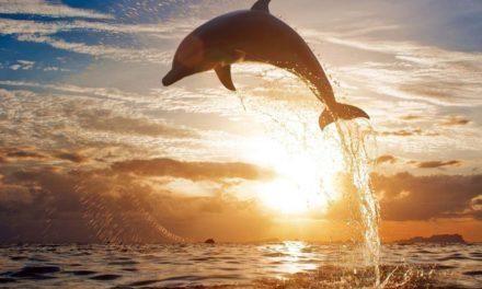 Sognare un delfino. Il delfino nei sogni Significato