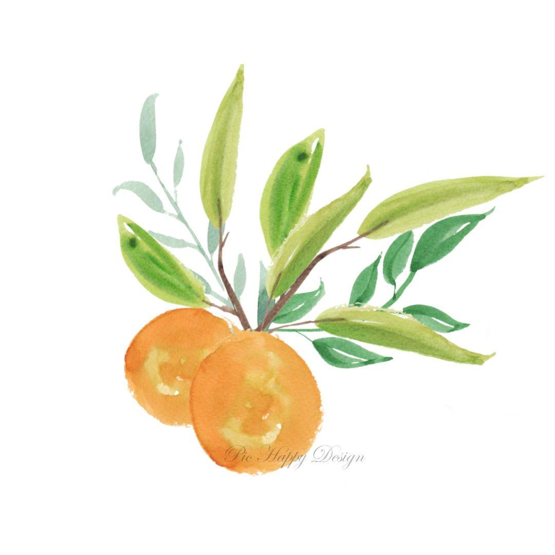 Orange Blossom - Watercolor Illustration #watercolorillustration #oranges #fruits #illustration #watercolor #watercolour