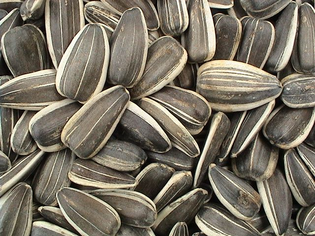how to dry sunflower seeds to eat