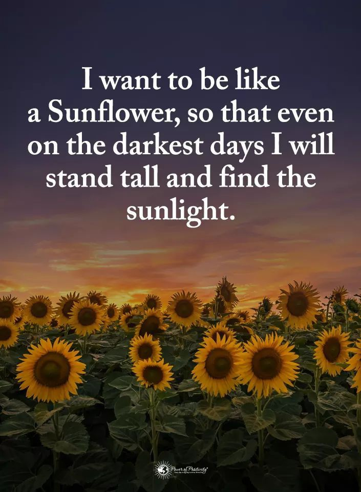 Pin by Gina Oser-Ciancio on Random   Sunflower quotes ...