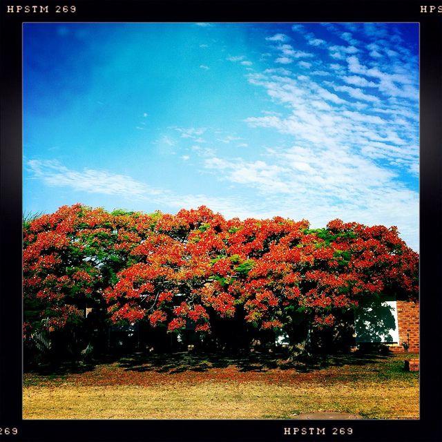Seasonal trees at home. by Black Swan Photos, via Flickr