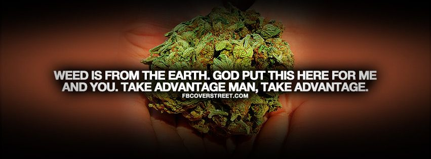 weed is from earth quote wallpaper cannabis quotes