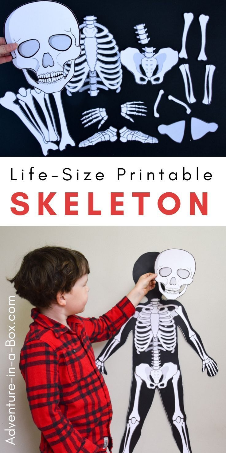 Life Size Printable Skeleton For Kids Body Preschool Skeleton For Kids Human Body Activities [ 1472 x 736 Pixel ]