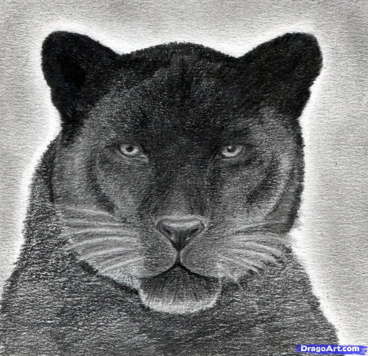 15++ Animal drawing black panther ideas in 2021