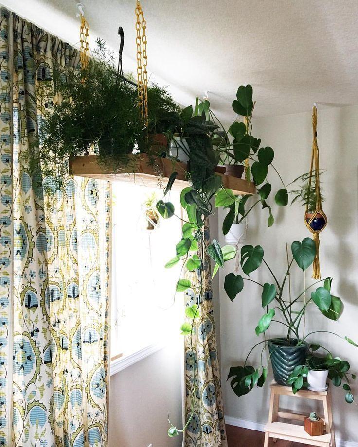 Clever Ways To Hang Your Plants Plantas, Verde y Jardín - decoracion de interiores con plantas